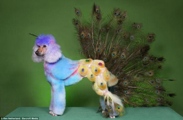 dressedtokill-doggrooming10