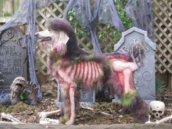 dressedtokill-doggrooming13