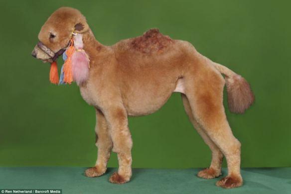 dressedtokill-doggrooming3