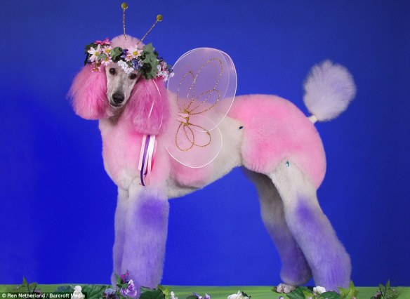 dressedtokill-doggrooming4