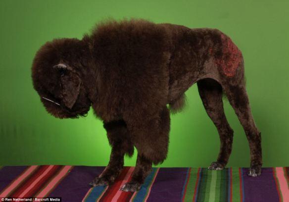 dressedtokill-doggrooming9